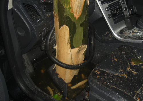 Ein Baum steckt im Volvo XC60