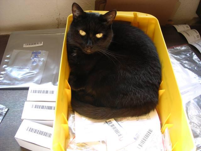 Tierische Materialprüfung